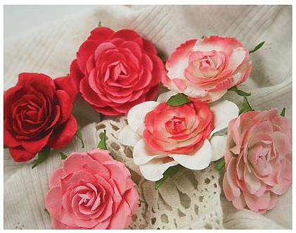 533137_01 coral rose