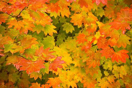 17 solange oregon_fall_colors