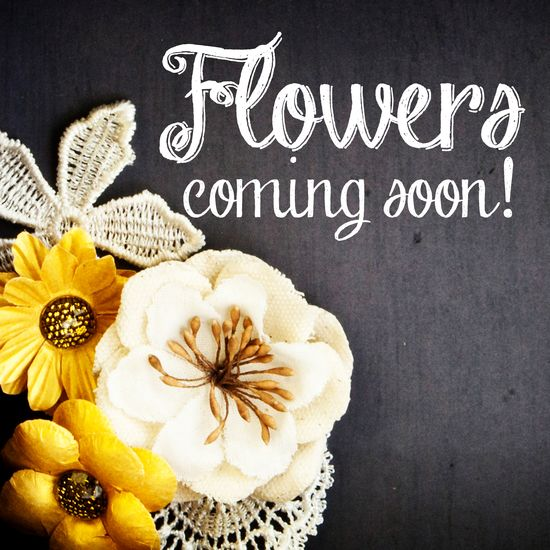 Minisp-flowers