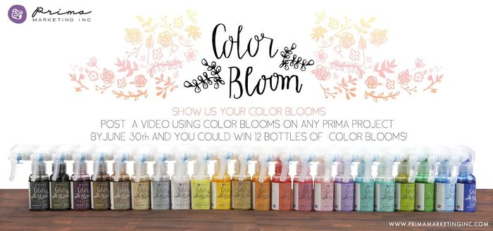 Color Bloom Contest